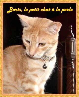 Boris le petit chat à la perle (2)