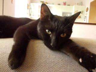 Salem divano