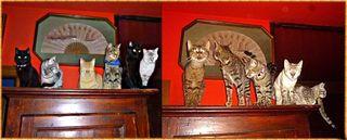 2 armadio + armadio gattila cesar etc