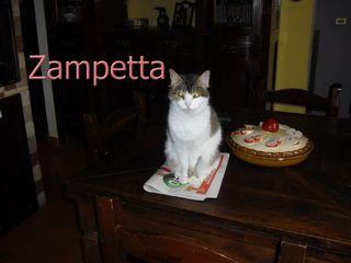 Zampetta 2
