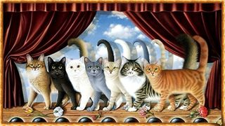 1 compagnia felina commedia