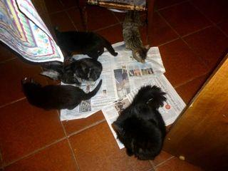 8 ex giornale