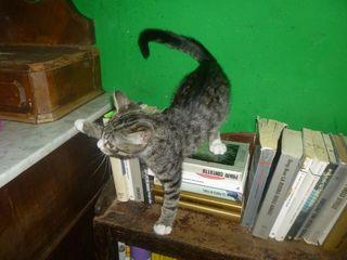 Agamennone libreria