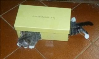 Agamennone scatola (2)