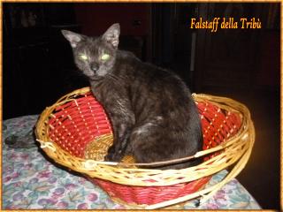 Falstaff (2)