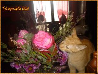 Tolomeo fiori