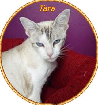 Tara  1 piano