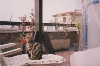 Billo (2)