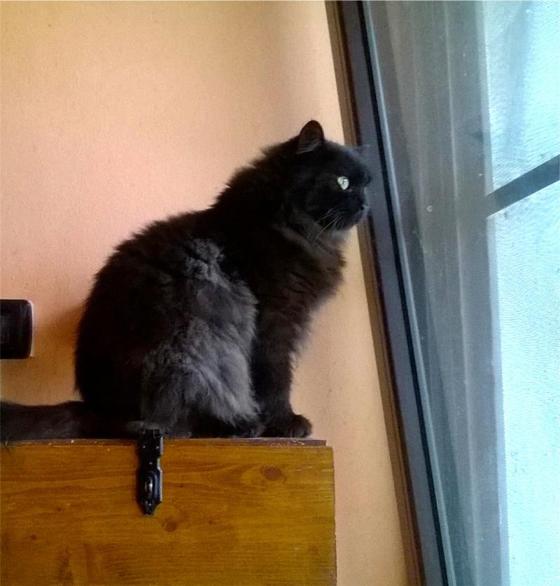 Salem curioso