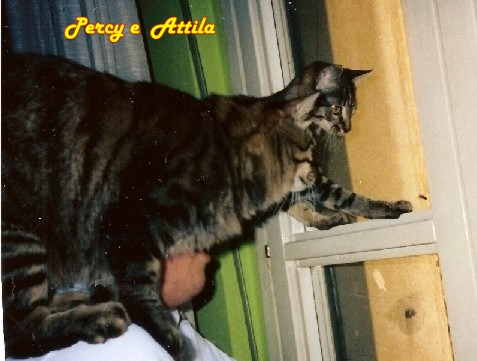 Attila e percy