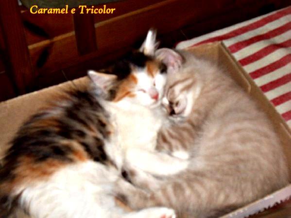 Caramel e tricolor