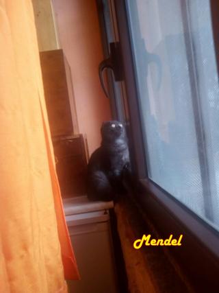 Mendel finestra (2)