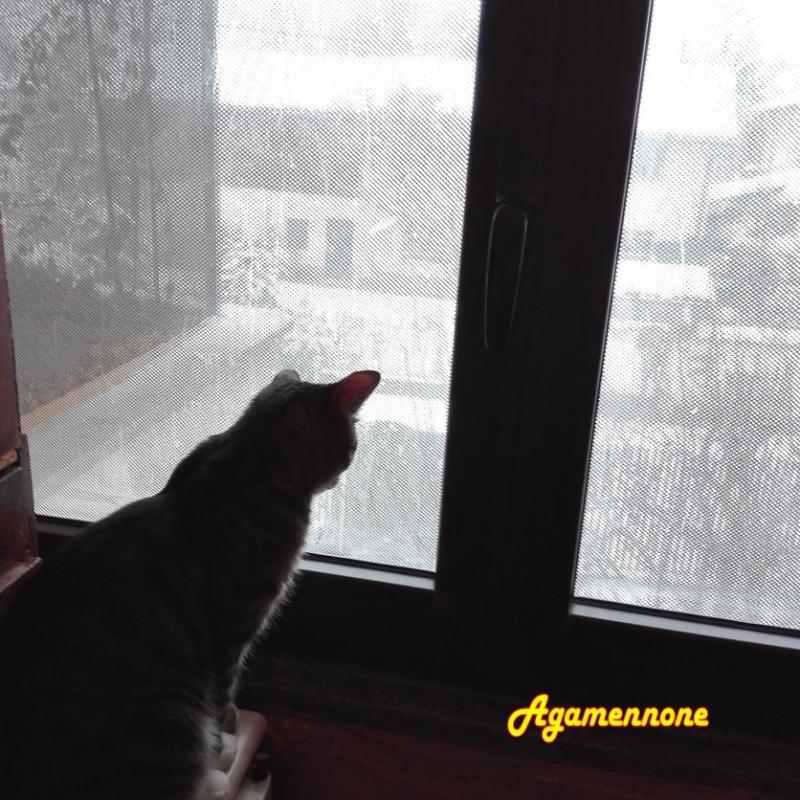 Agamenone  neve