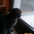 Mendel alla finestra: come nevica!