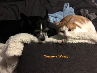Tommy e woody