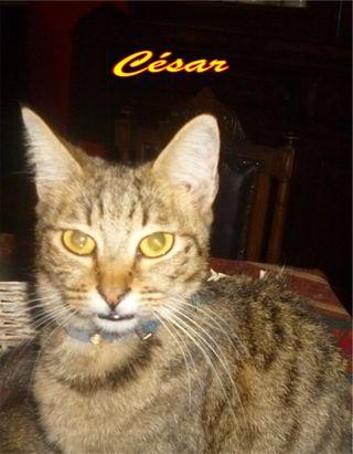 César 1