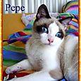 Pepe 1 (2)