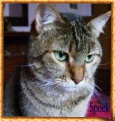 Spock 1