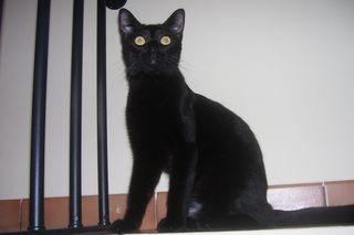 Salem lo stregatto