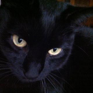Salem stregone