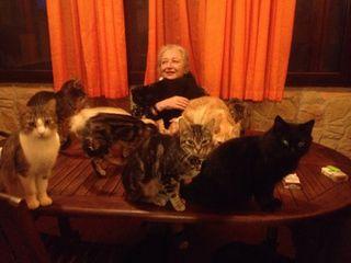 28io gatti aprile 2015