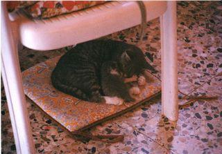 Cleo e ambrogio 2