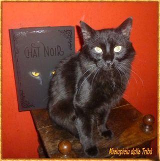 Miciupiciu chat noir