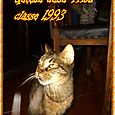 Gattila nato 1993 25 aprile circa