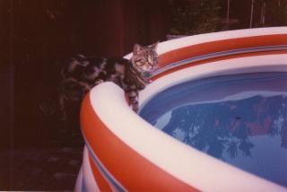 Nella piscina