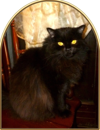 Salem 2