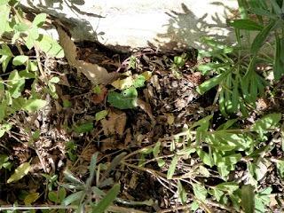 18 nido ricci