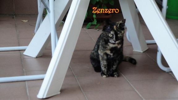 IMG_2663 Zenzero  cucciola