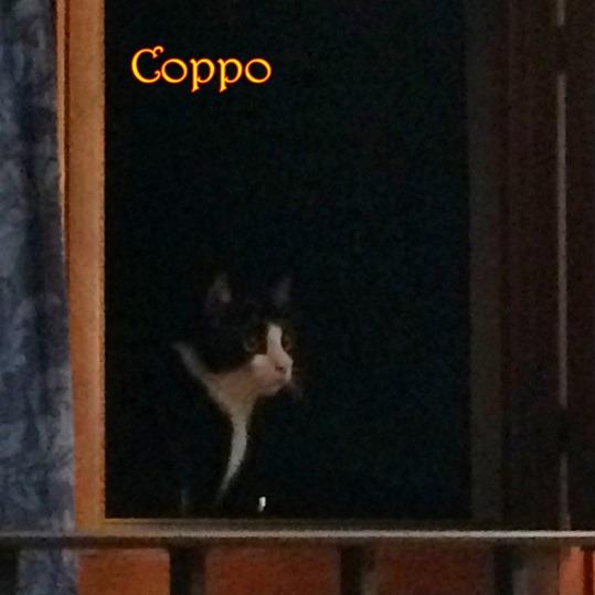 IMG_3009 Coppo alla finestra