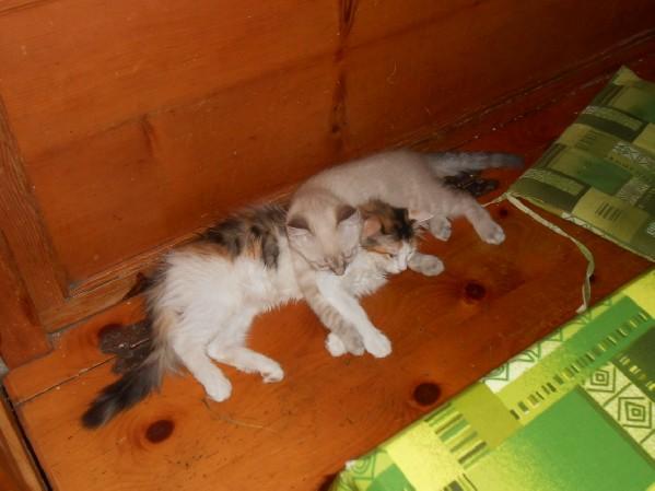 Caramel con la sorella tricolor