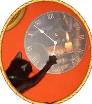 Amartia orologio (2)