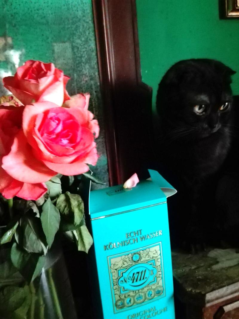 Mendel rose (6)