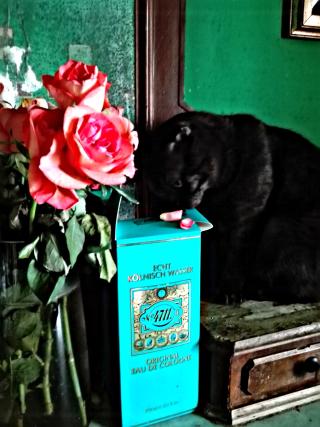 Mendel rose (11)