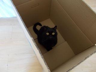 19 marcolino scatola