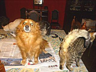 Samanha sul giornale