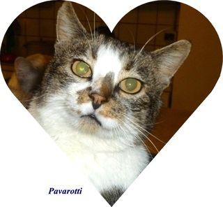 Pavarotti cuore