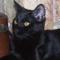 Salem 5