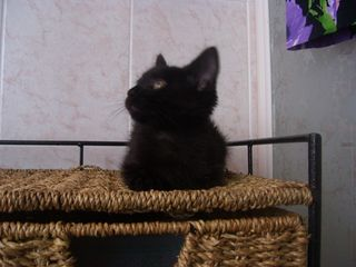 Salem all'arrivo
