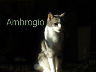 Ambrogio (3)