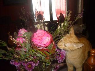 4 Tolomeo fiori