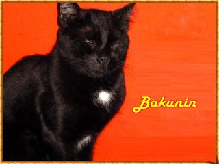 Bakunin nome