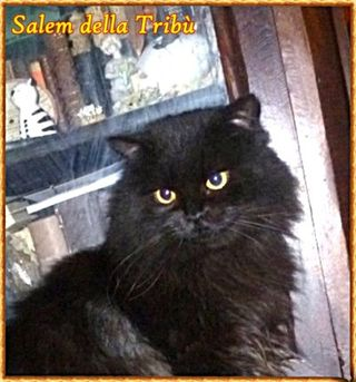 Salem nome