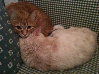 Gattila e rabarbaro