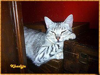 Khadija (3)