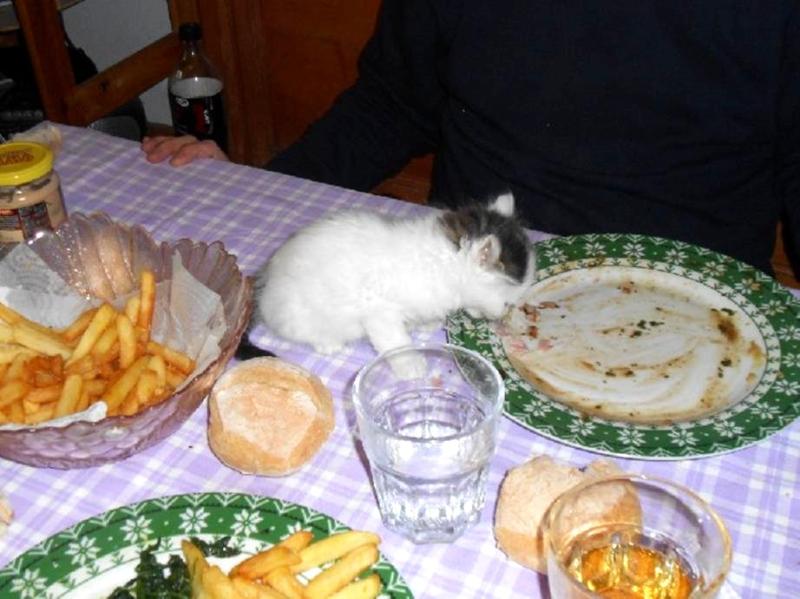 Piccola sul tavolo