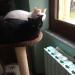 Momina e Pepe di Giovanna
